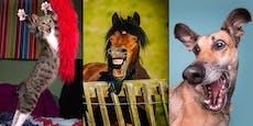 Das sind die lustigsten Tierfotos des Jahres