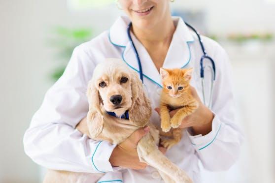 Eine Katze aus Frankfurt und ein Hund aus München sind mit dem Virus infiziert.