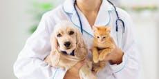 Die ersten zwei Haustier-Corona-Fälle wurden gemeldet