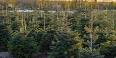 AK-Test: Große Preisunterschiede bei Christbäumen