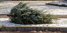 DAS passiert nach Weihnachten mit Wiener Christbäumen