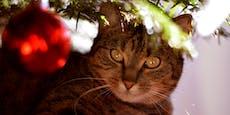 Christbaum für die Katz'? So bleibt die Tanne stehen