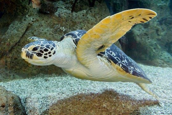 Haus des Meeres darf am 24. und 25. Dezember für Besucher öffnen.