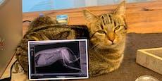 Frau klagt an: Wer hat meine Katze angeschossen?