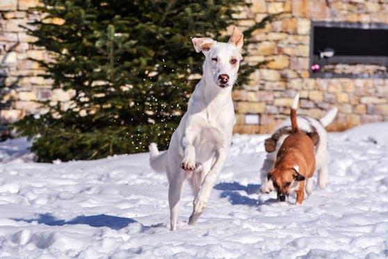 Unsereins ist ja manchmal gar nicht so erfreut über das weiße Zeug - die Hunde meistens schon!