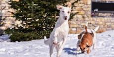 Hier sind eure Hunde im Schnee!