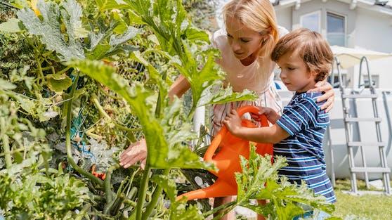 Im Krisenjahr haben viele Menschen Interesse für die Natur und ihre Nutzpflanzen entwickelt.
