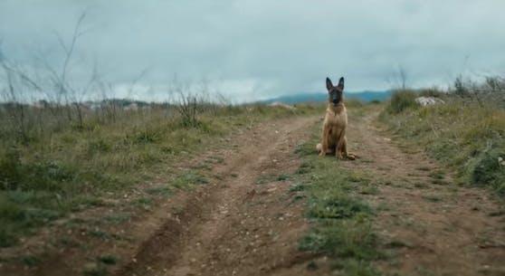 """Ein Video der Tierschutzorganisation """"Animallife"""" sorgt im Netz für Wirbel."""