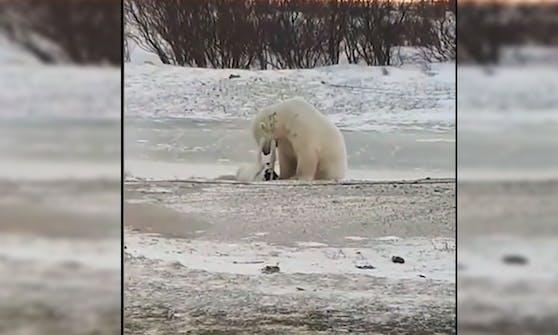 Zwei Wildtierfotografen filmten diese bezaubernden Szenen.