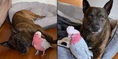 Hund und Kakadu haben eine ganz besondere Beziehung
