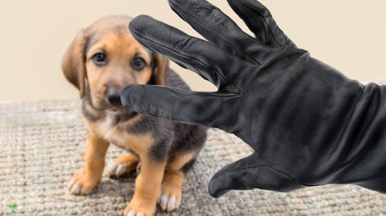 In England werden regelmäßig Haustiere gestohlen um aus ihnen Profit zu schlagen.