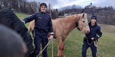 Das sind die Pferdeflüsterer von der Polizei