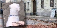 """""""Werde verrückt!"""" Hund nach Balkan-Beben unter Schock"""