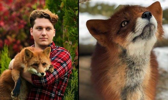 """Der fünfeinhalb Jahre alte Fuchs """"Woody"""" wurde von seinem Herrchen damals aus einer Pelzfarm Nähe Moskau freigekauft."""