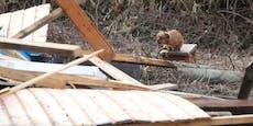 Hund wartete ganzen Tag vor Trümmern auf totes Herrchen