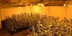 Mann in Wien hat 222 Cannabispflanzen in der Wohnung