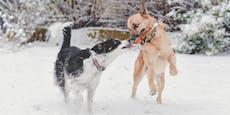 Wintereinbruch: Schickt uns eure lustigsten Schneefotos