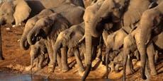 Dürre: 170 Elefanten aus Namibia stehen zum Verkauf