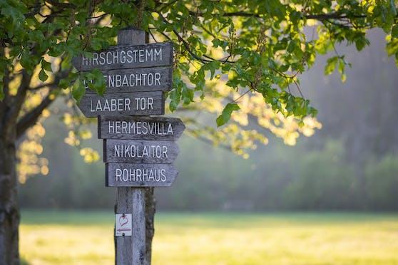 Der Lainzer Tiergarten ist als Nah-Erholungsgebiet der Wiener sehr beliebt. Nun öffnet er wieder seine Tore.