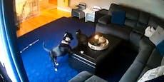 Video: Katze brennt und bleibt... cool!