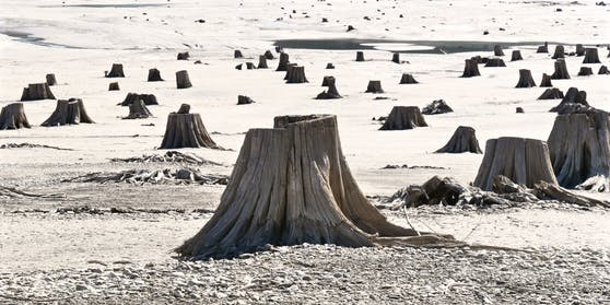 Die Menschheit zerstörten den wichtigen Lebensraum vieler Tiere und Pflanzen