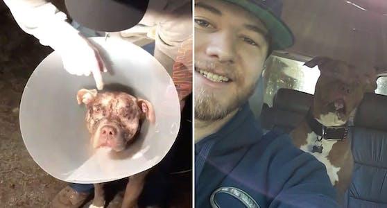 Kaleb Bentham befreite seinen Hund aus dem Maul eines Bären.