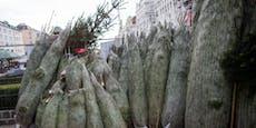 Große Preisunterschiede bei Christbäumen