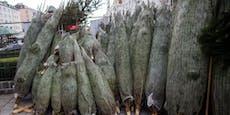 Mehr Christbäume an Private verkauft, aber…