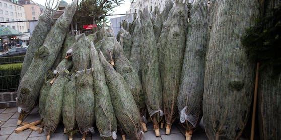 Der Christbaum-Verkauf in Wien beginnt am Wochenende.