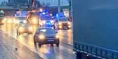 Acht Autos überrollten Rinder auf der Westautobahn