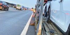 Kühe auf Westautobahn verursachen Crash