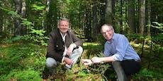 Wildnisgebiet Dürrenstein wird ausgeweitet