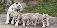 """Hilferuf vom Weißen Zoo: """"Geld für Futter geht aus"""""""