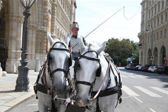 Hietzings Bezirksvorsteherin-Stellvertreter (ÖVP) Christian Gerzabek mit seinen Pferden Arkan (links) und Jimmy