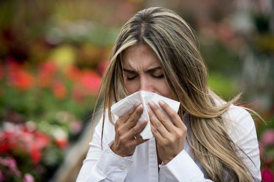 Pollenallergie tritt heuer verstärkt auf.