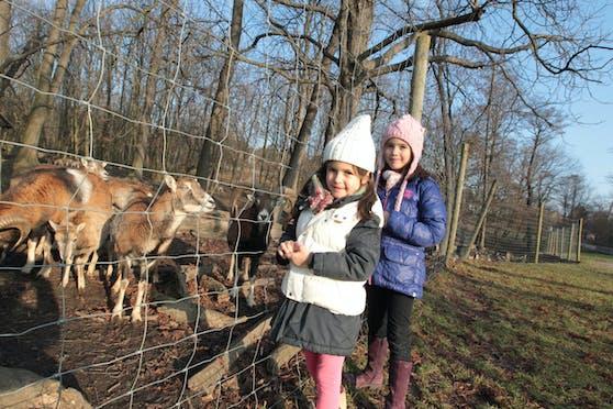 Auch wenn wettermäßig der Winter zurückkehrt: Die Wintersperre des Lainzer Tiergartens in Wien-Hietzing ist am Samstag zu Ende. Das gesamte Areal ist wieder geöffnet.