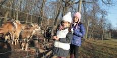 Lainzer Tiergarten macht im Lockdown Wintersperre light
