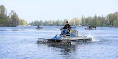 Sauber! Ab sofort mähen Boote die Alte Donau durch