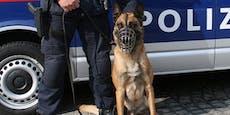 """Tiroler Polizei """"erschnüffelt"""" Einbrecher"""