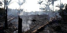 Brasilien: Bierpreisprotest gegen Regenwaldabholzung