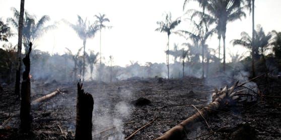 Hunderte Quadratkilometer an Regenwald wurden durch Brandrodung bereits vernichtet.