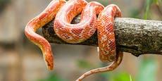 Exotische Schlange vor Haus sorgt für Aufregung