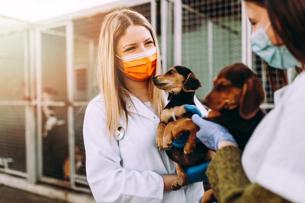 Wiener Tierschutzverein startet Tiervergabe