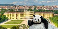 Schönbrunn öffnet wieder - das musst du wissen