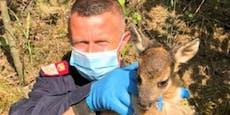 Polizei befreite Rehkitz aus offenem Schacht