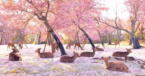 Keine Touristen - über 1000 Rehe genießen Park