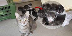 Katze trächtig ausgesetzt - jetzt sind Babys da