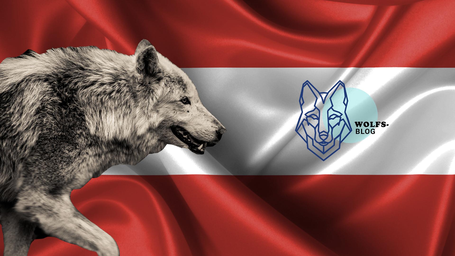 Wie geht es in Österreich mit dem Wolf weiter?