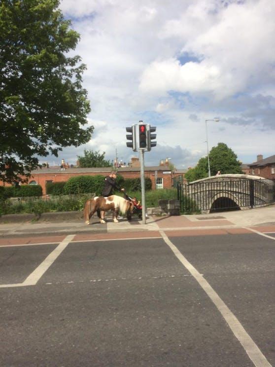 Dublin: Mann spaziert mit Pony