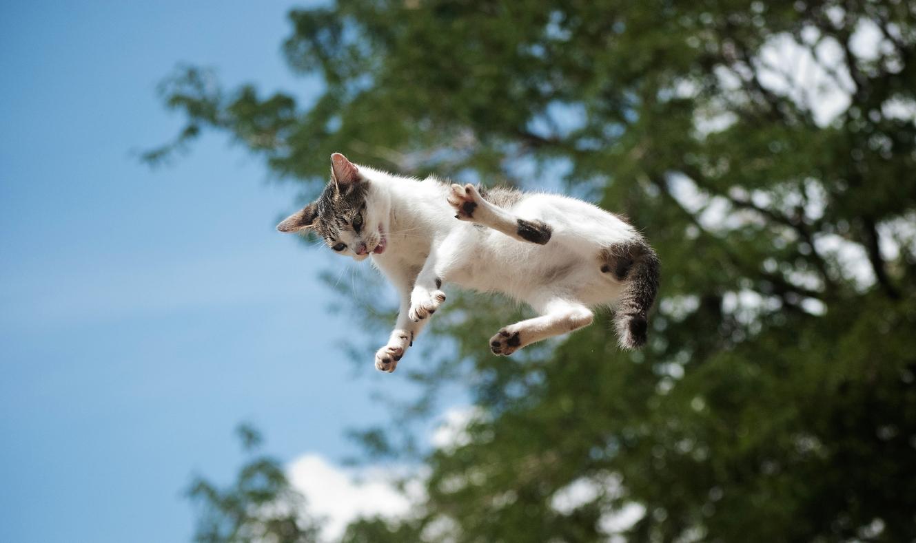Landen Katzen immer auf allen Vieren?